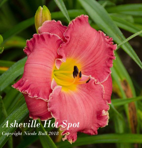 Asheville Hot Spot