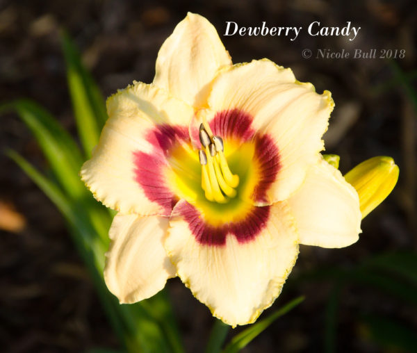 Dewberry Candy