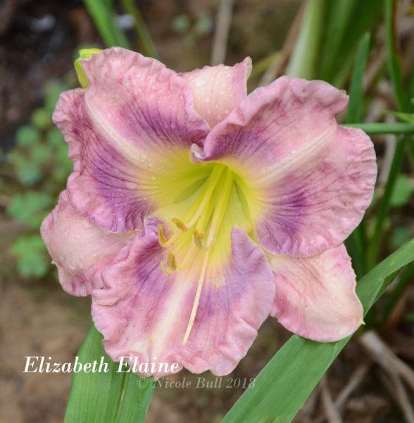 Elizabeth Elaine