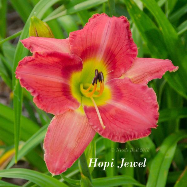 Hopi Jewel
