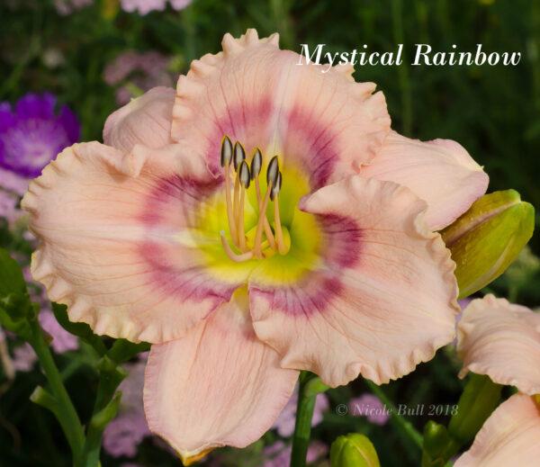 Mystical Rainbow