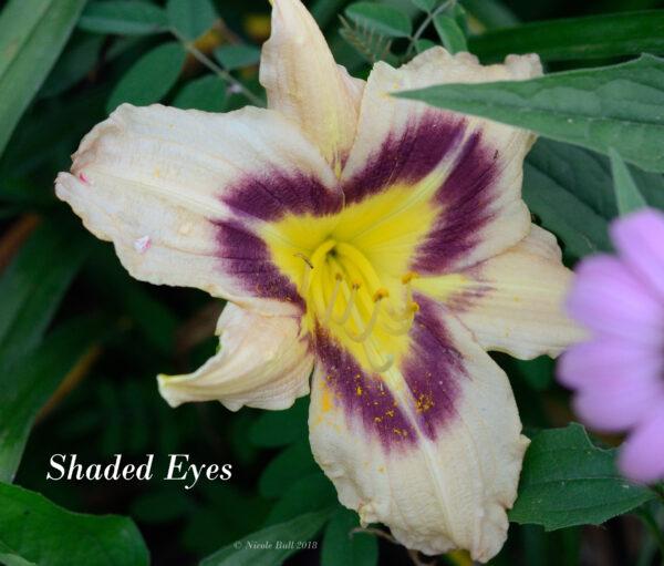 Shaded Eyes
