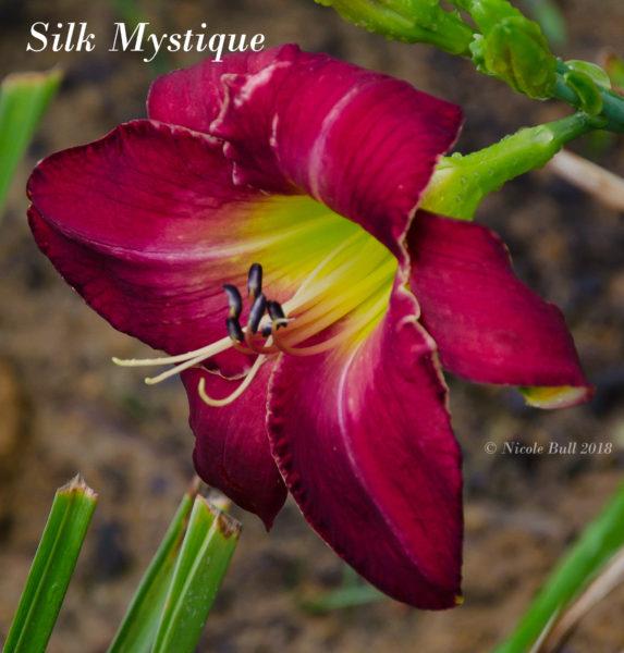 Silk Mystique