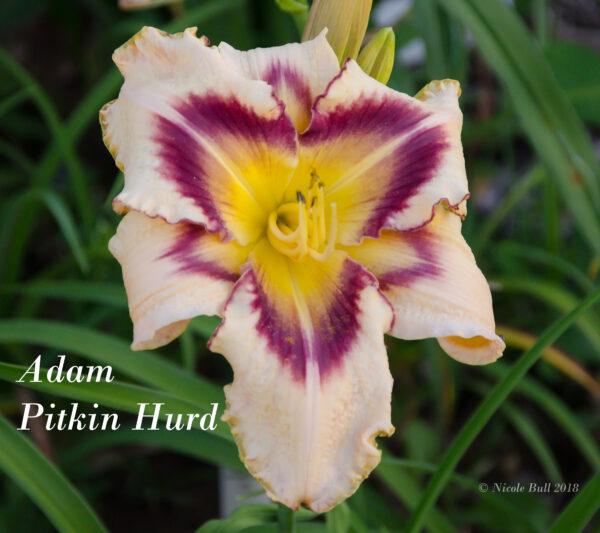 Adam Pitkin Hurd