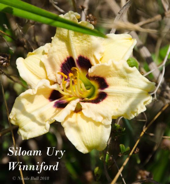 Siloam Ury Winniford