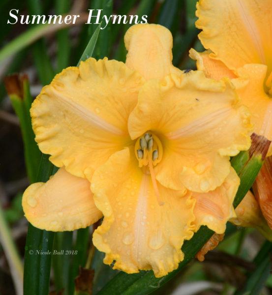 Summer Hymns