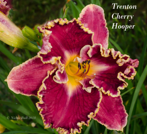 Trenton Cherry Hooper