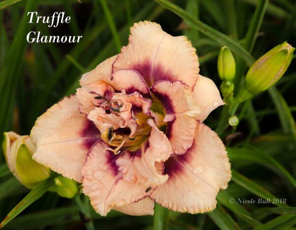 Truffle Glamour